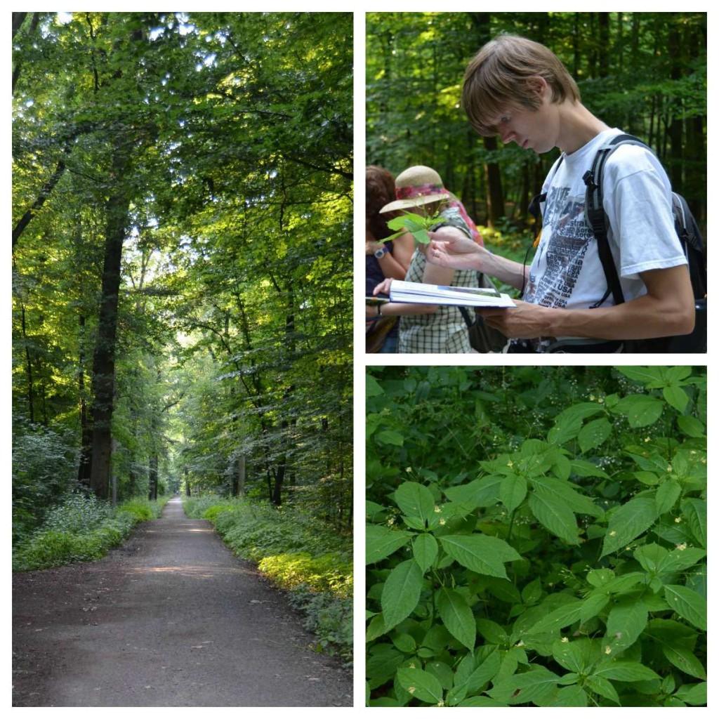 Wildkräuterspaziergang im Wald