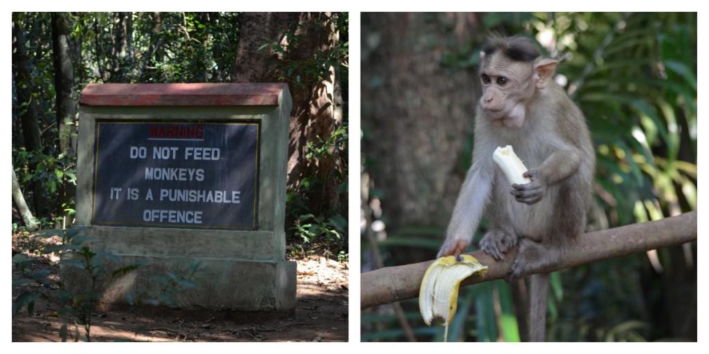 Affenfütterung eigentlich verboten