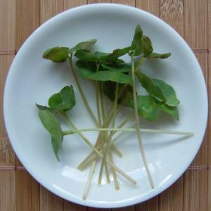 Buchweizen Minipflänzchen (microgreens)