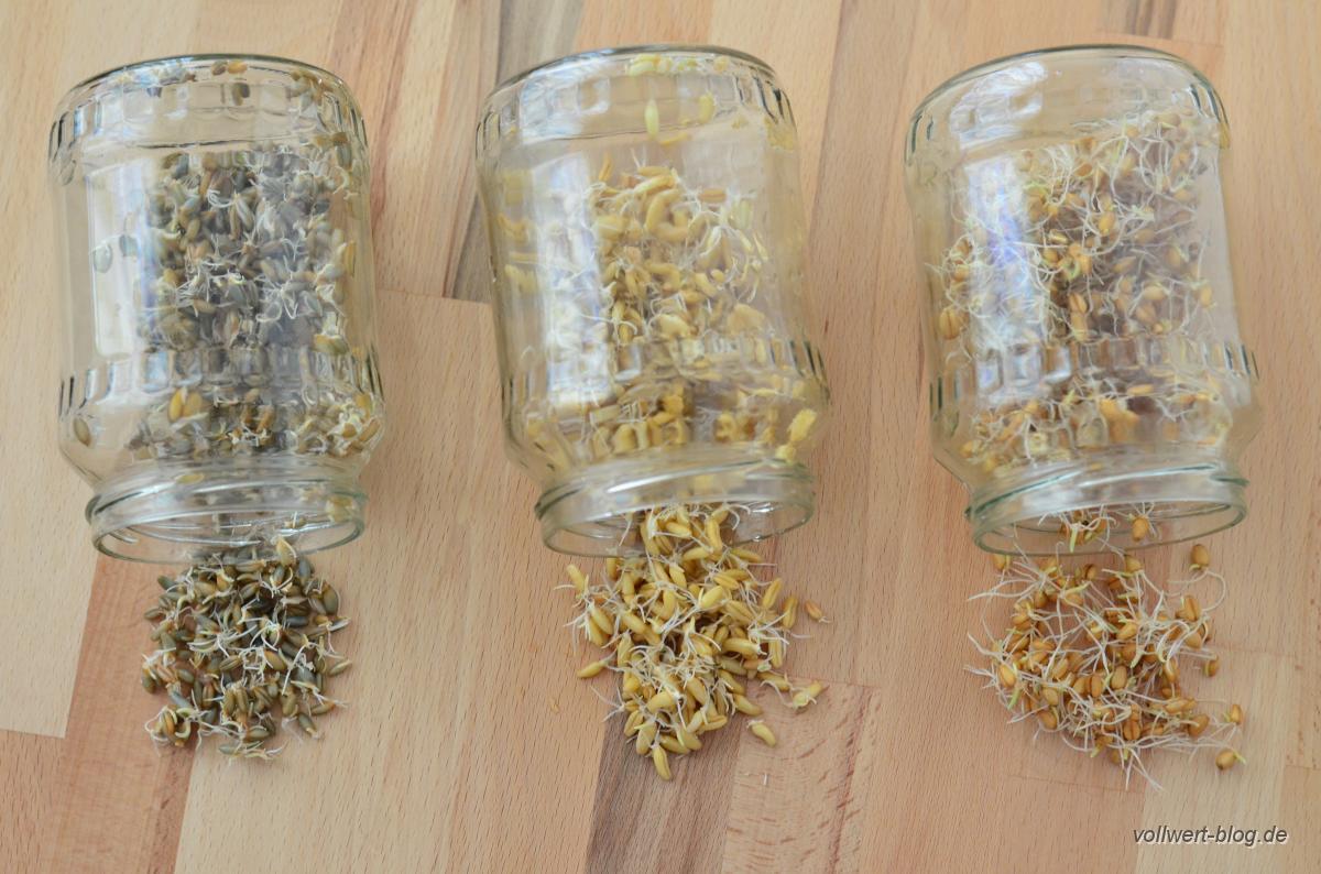 Roggen-, Kamut- und Weizensprossen