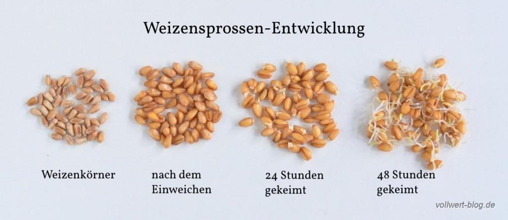 Weizensprossen