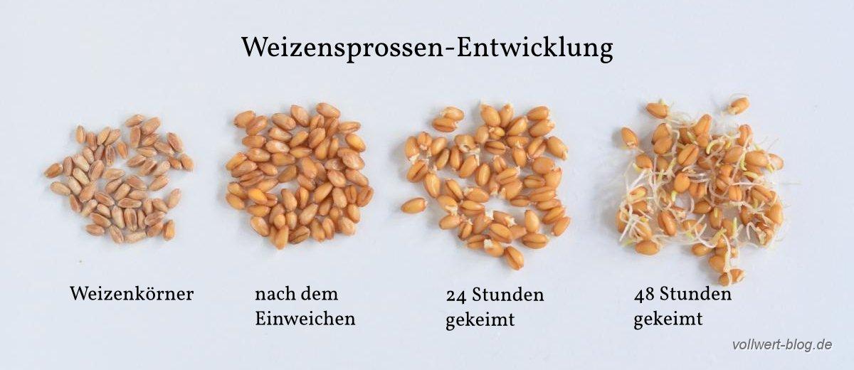 Getreidekörner Unterscheiden