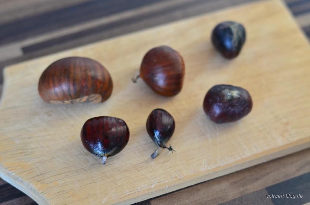 Maronen mit kleinen Keimling (Maronen-Sprossen)