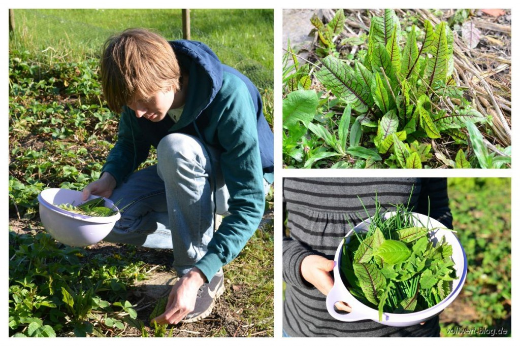 (Wild-) Kräuter sammeln in unserem Garten