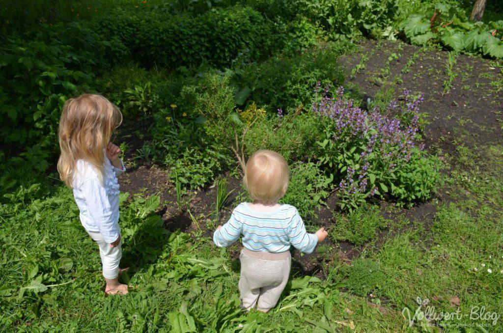 Rosmarin und andere Kräuter bei uns im Garten