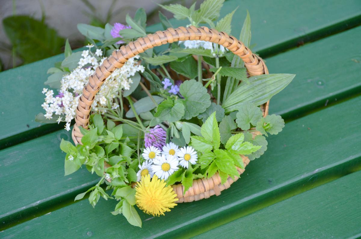 bester gesunder Notvorrat: Wildkräuter aus unserem Garten